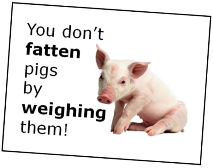 fattening-pigs-assessment